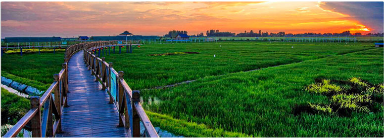 Space of Rice Dreams - Rice Paddy Art Theme Park